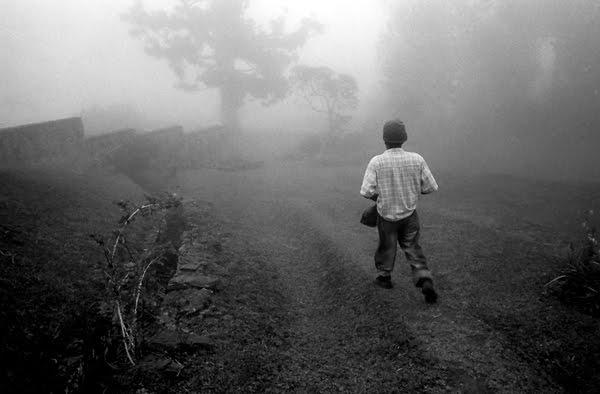 fog and farmer 2