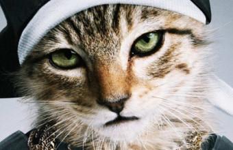 Method Man снимется в фильме про котёночка «Keanu»