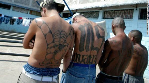 ms 13 gang Ms-13 - the gang that scares other gangs published april 28, 2017 fox news facebook 0 twitter 0 livefyre email print they're known as ms-13, ms.
