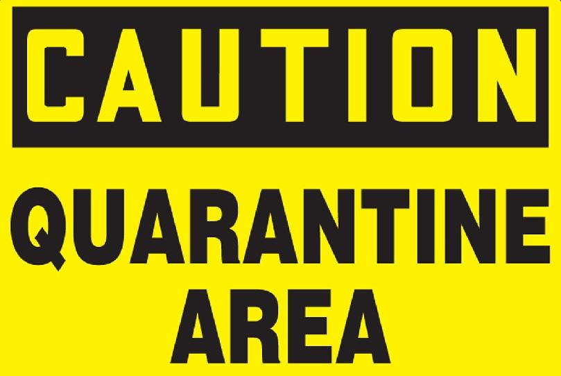«Self Quarantined»